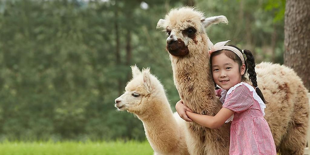 Alpaca World